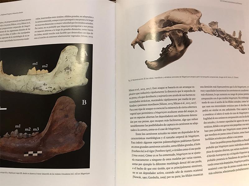 La colina de los Tigres Dientes de Sable. Los yacimientos miocenos del Cerro de los Batallones. Catálogo de la exposición.