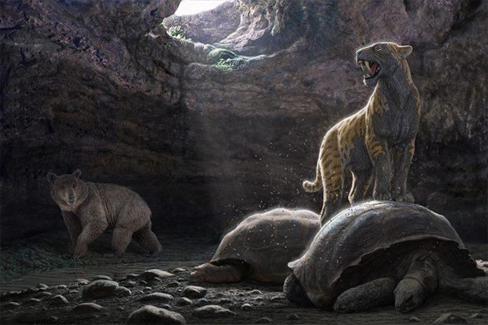 La colina de los Tigres Dientes de Sable. Los yacimientos miocenos del Cerro de los Batallones.