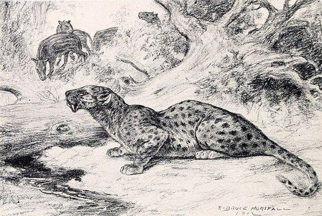 Hoplophoneus