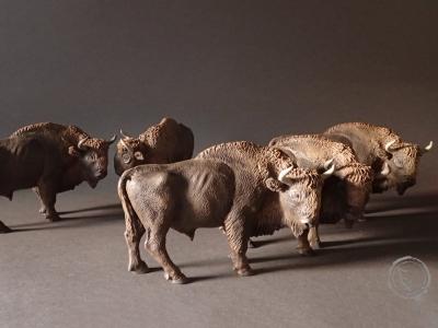 Bisonte europeo V