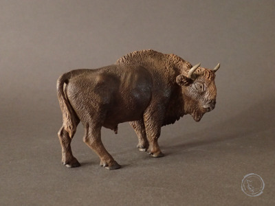 Bisonte europeo VII