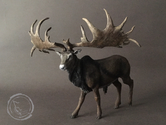 El alce irlandés, ciervo gigante o megalocero II